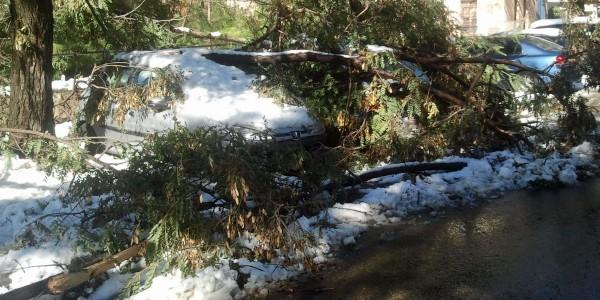 auto's onder boomtakken die door het gewicht van de sneeuw afbraken